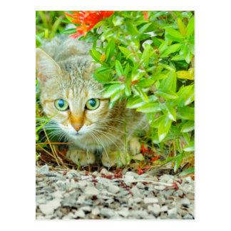Hidden Domestic Cat with Alert Expression Postcard