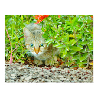 Hidden Domestic Cat with Alert Expression Postcard