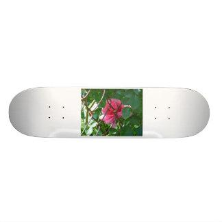 Hidden Gem Custom Skateboard
