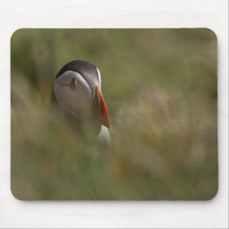 Hide and Seek Puffin Mouse Pad