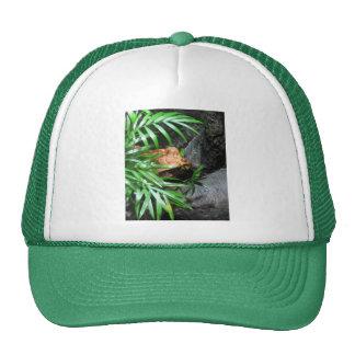Hiding Frog CB Cap