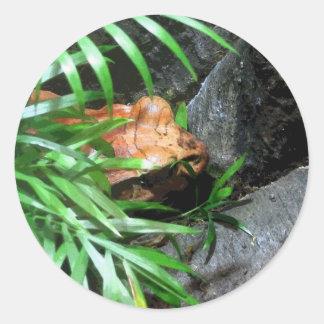 Hiding Frog CB Round Sticker
