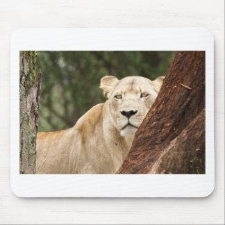 Hiding Lioness Mouse Pad