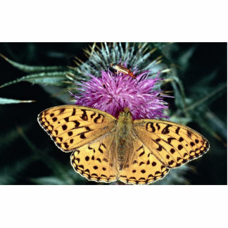 High brown fritillary butterfly cut out