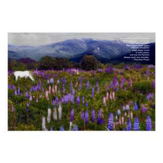 High Country Lupine Dreams: Poster