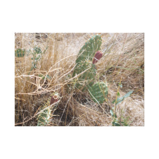High Desert Cactus Canvas Print