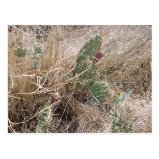 High Desert Cactus Postcard
