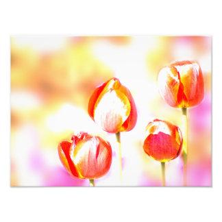 High Key Red Tulip Flower Quartet Photo Print