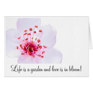 high-key-sakura-blossom-800, Life is a garden a... Card