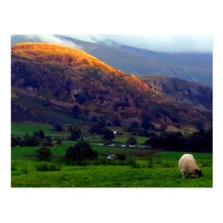 High Rigg Cumbria Postcard