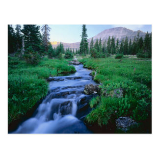 HIGH UINTAS WILDERNESS, UTAH. Stillwater Fork Postcard