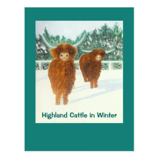 Highland Cattle in Winter Postcard