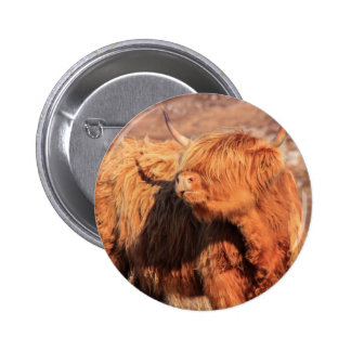 Highland Cow Button Badge