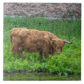 Highland cow ceramic photo tile