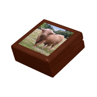 Highland Cow Gift Box