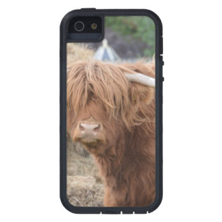 Highland Cow iPhone 5 Cover