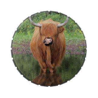 Highland cow jelly bean tin jelly belly tin