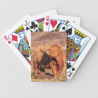 Highland Cow Playing Cards
