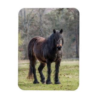 Highland Pony Magnet