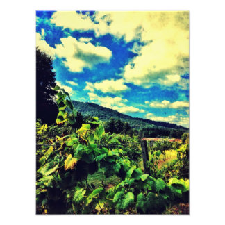 Hightower Creek Vineyards Photograph