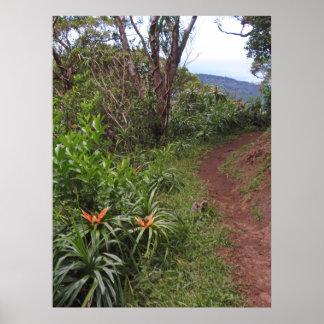 Hiking Trail on O'ahu, Hawai'i Poster