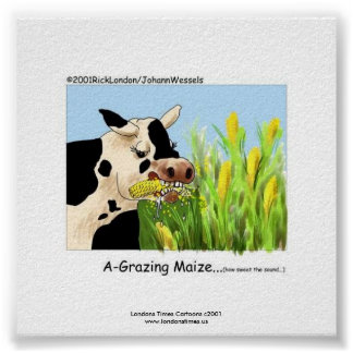 "Hilarious Cow Framed Print ""A-Grazin' Maize"" Posters"