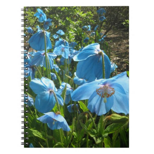 Himalayan Blue Poppy 80 page notebook