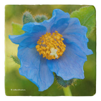 Himalayan Blue Poppy Trivet