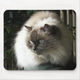 Himalayan Cat Mouse Pad