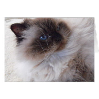 Himalayan Kitty Card