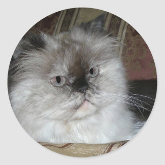 Himalayan Torti Point Classic Round Sticker