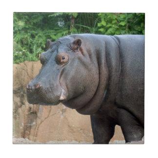 hippo-6 small square tile