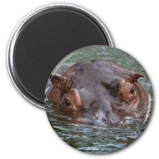 Hippo 8879 magnet