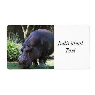 Hippo AJ17