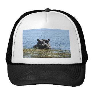Hippo hat
