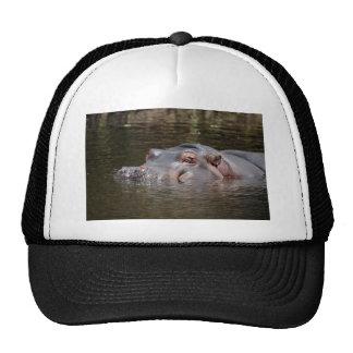Hippo hiding mesh hats