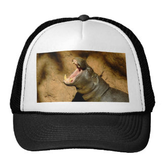 hippo hungry hats