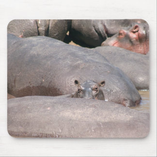 Hippo Looking at You Mouse Pad