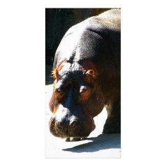 Hippo Photo Card