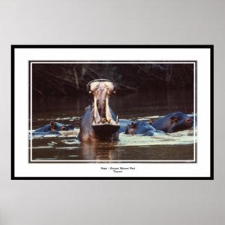 Hippo - Serentgeti Poster
