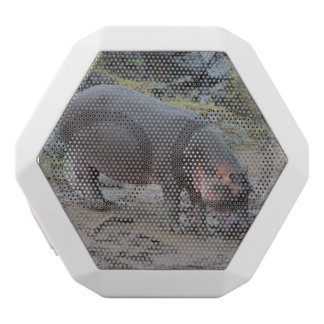 hippopotamus, white boombot rex bluetooth speaker