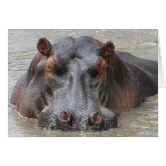 Hippopotamus Card