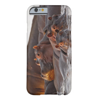 Hippopotamus, Hippopotamus amphibius, Lake Barely There iPhone 6 Case