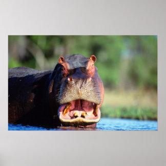 Hippopotamus (Hippopotamus Amphibius) Threat Poster