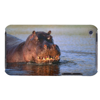 Hippopotamus in River Barely There iPod Cases