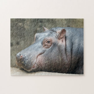 Hippopotamus photo puzzle