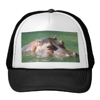 Hippopotamus Swimming On The Surface Cap