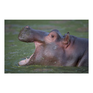 Hippopotamus VII Portrait Poster