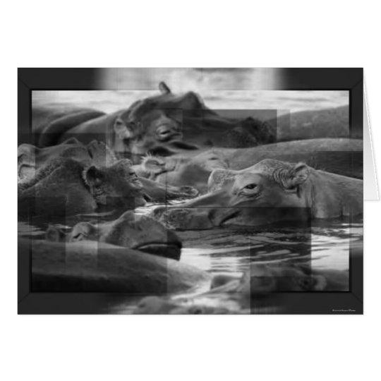 Hippopotamuses Card
