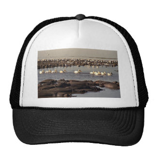 Hippos and pelicans hat